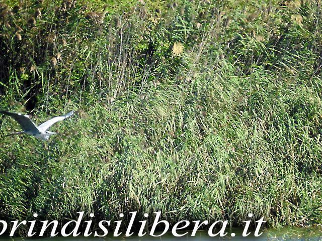 Invaso-Cillarese-Brindisi-23