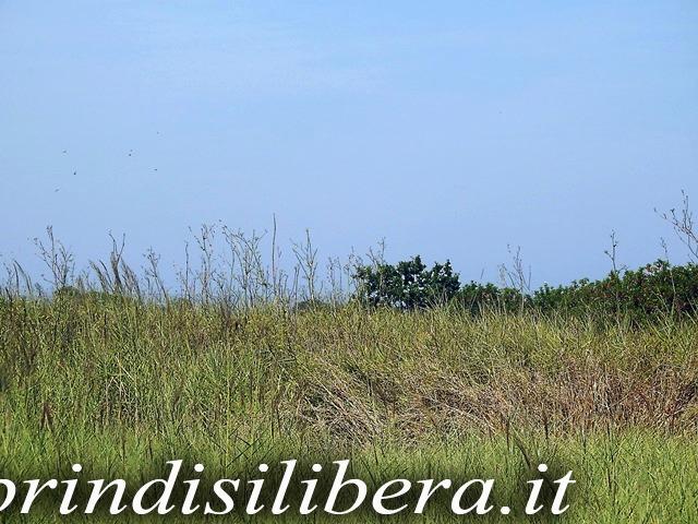 Invaso-Cillarese-Brindisi-25