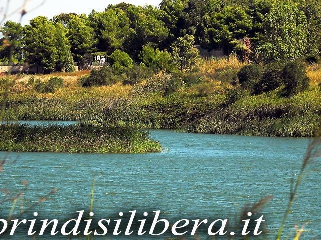 Invaso-Cillarese-Brindisi-31