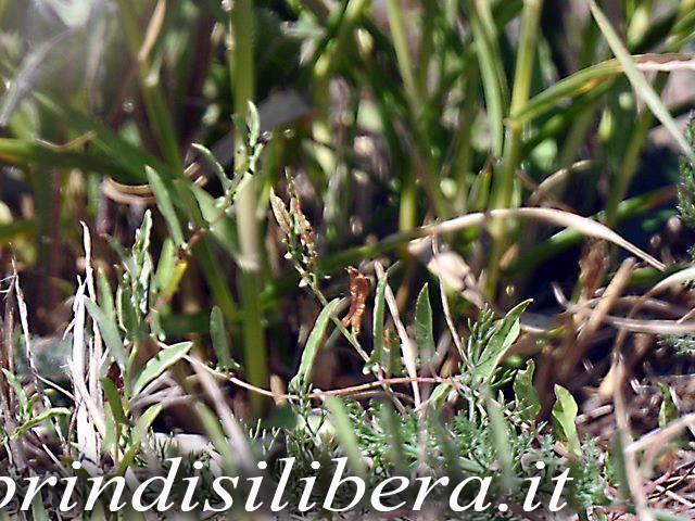 Invaso-Cillarese-Brindisi-36
