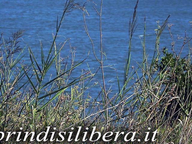Invaso-Cillarese-Brindisi-42