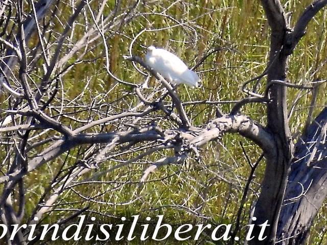 Invaso-Cillarese-Brindisi-51