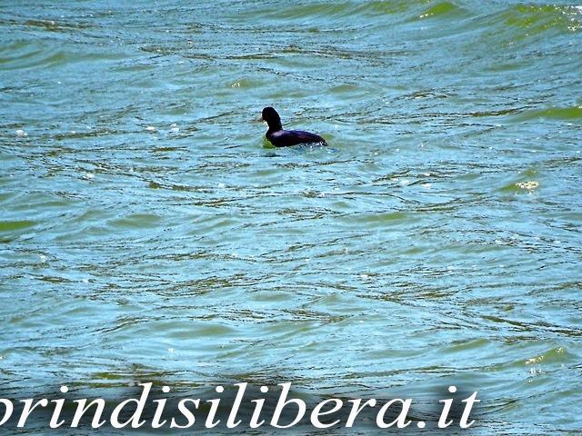 Invaso-Cillarese-Brindisi-56