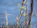 Invaso-Cillarese-Brindisi-55