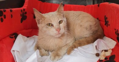 BRINDISI.Salvato un gattino di circa 3 mesi.Grande sinergia tra le forze dell'ordine, i Vigili del Fuoco di Brindisi,la referente nazionale dell' Associazione Stop Animal Crimes  Italia  Antonella Brunetti