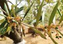 Clima torrido e persistente siccità provocano gravi danni all'agricoltura pugliese